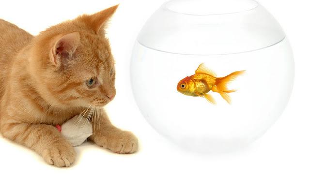 Kat en goudvis