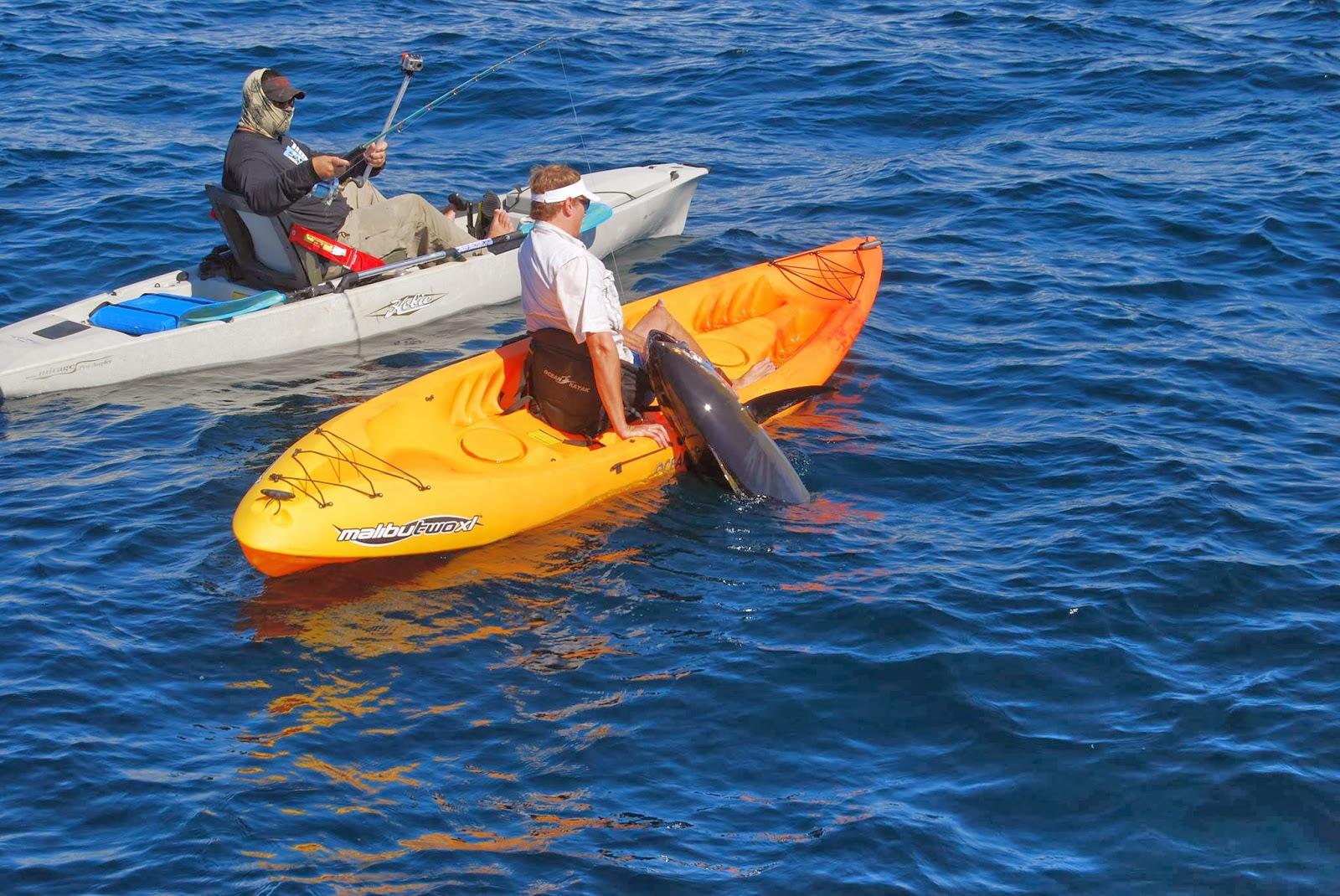 Texas Swimming: Huntin' Tuna