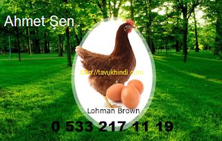 babaeski köy yumurta tavuğu-horozu satışı
