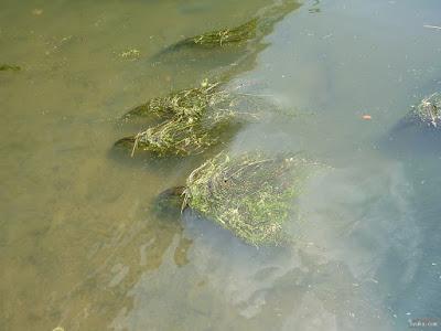 水中の植物