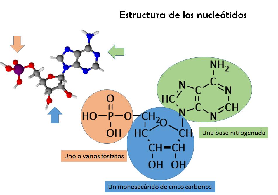 Resultado de imagen de sustancias y cadenas de moléculas