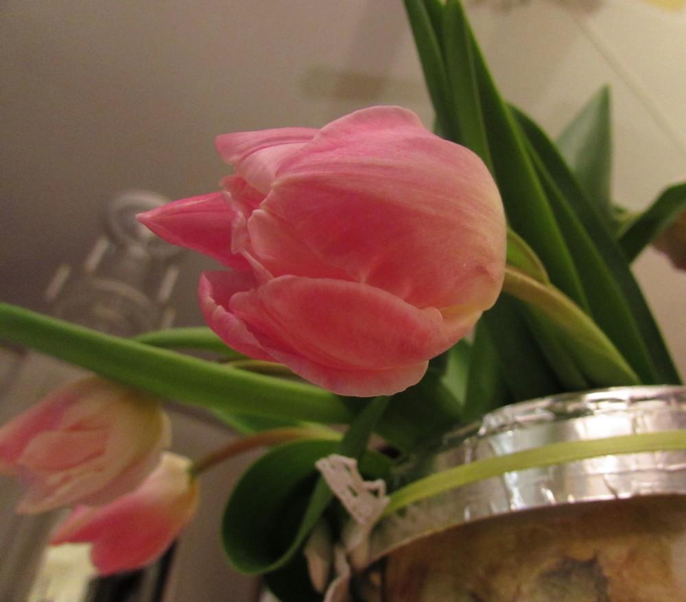 Tulppaanit.jpg