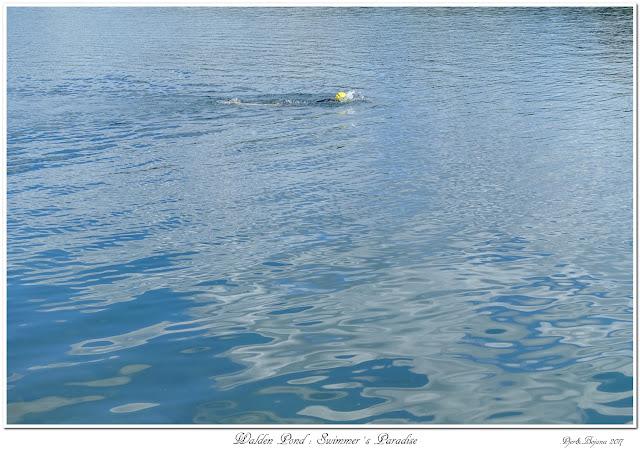 Walden Pond: Swimmer's Paradise