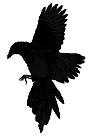 https://4.bp.blogspot.com/-ppeBuMLiPAI/V1rXYM8-LxI/AAAAAAAADHw/ISko0hSkx1cxO42vw2HGVg3uPkdHD4GJACLcB/s1600/raven2.png