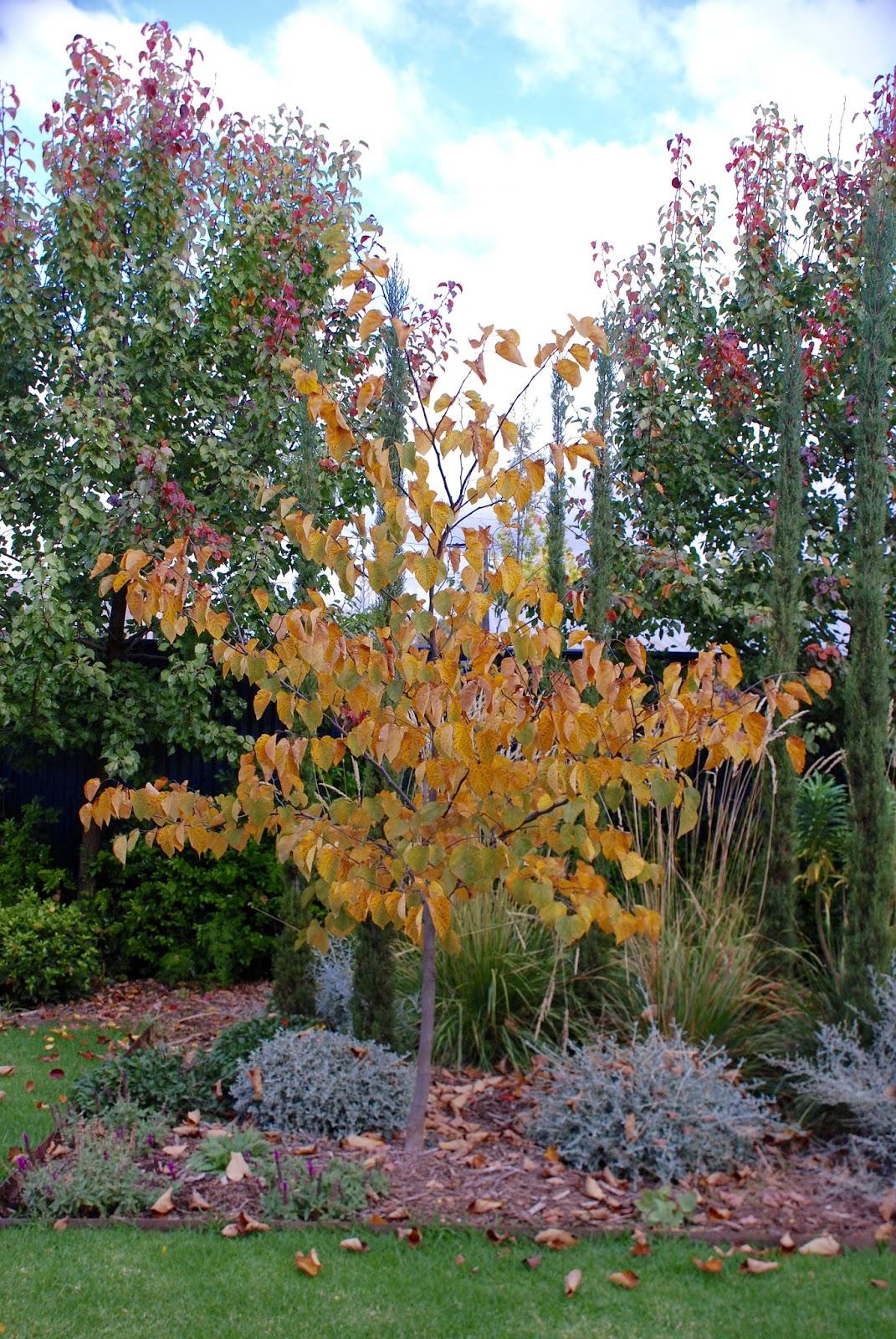 Adelaide Villa: Autumn and Winter Gardening