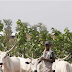 13 Killed As Cattle Thieves Attack Zamfara Village