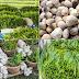 ผัก 5 ชนิด ที่ปลูกง่าย ขายได้ไว กินเจปลูกผักอะไรได้ราคาดี (เตรียมตัวก่อน ได้เปรียบ)