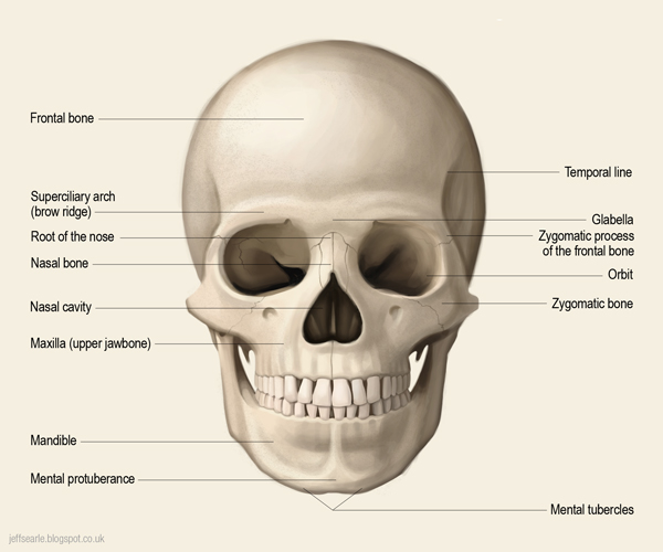 jeff searle the human skull Lip Diagram