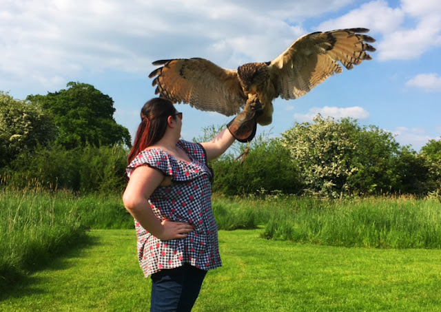 Barn Owl Centre Review Owl Flying Bristol Gloucester
