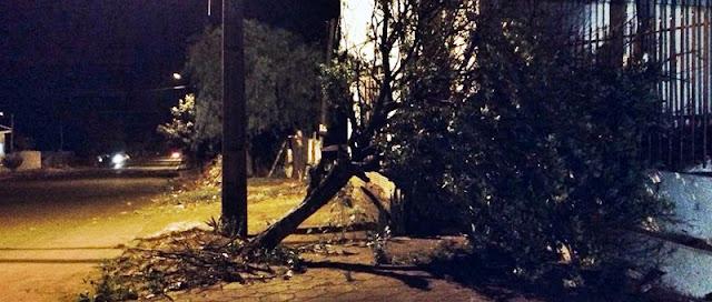 Ventos fortes chegam de surpresa e derruba árvores em Roncador