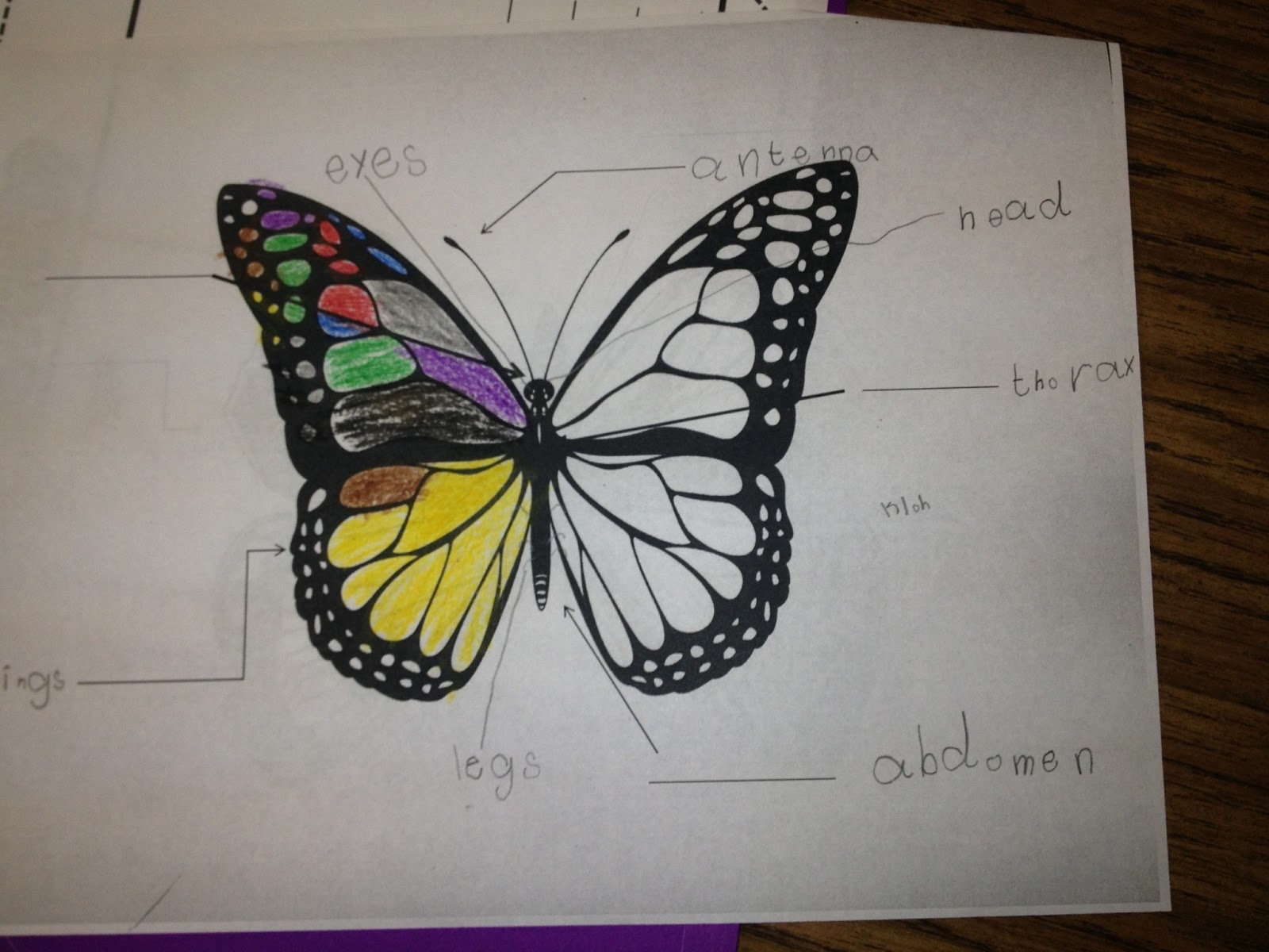 Butterfly Parts For Kids