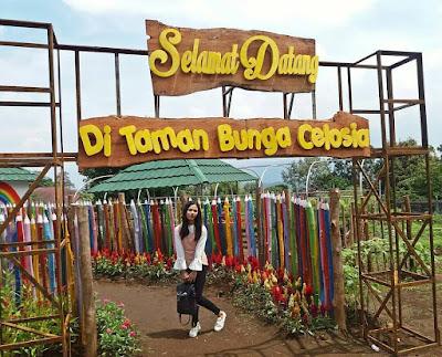 Tiket Masuk Taman Bunga Celosia Bandungan Semarang