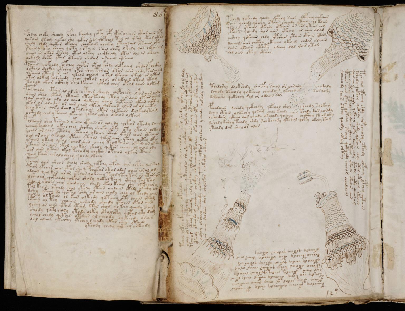 manuscrito155