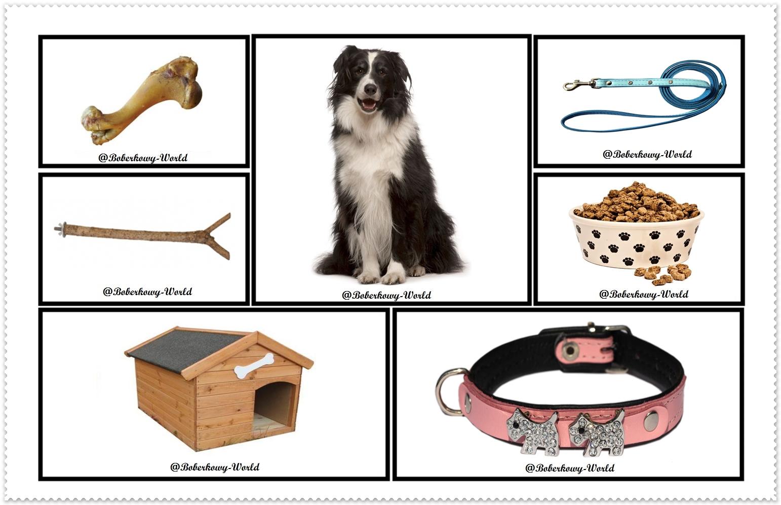 Boberkowy World : Zwierzęta domowe/ Pies- zabawa matematyczna ...