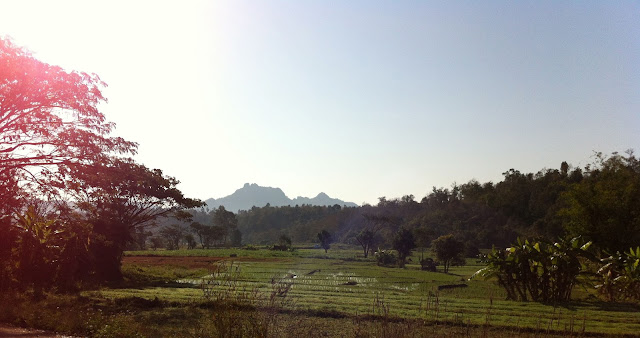 Overlooking rice fields in Lampang North Thailand
