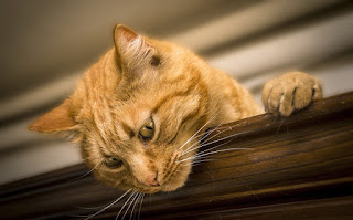 Image: Cat Looking Down, by Simone_ph on Pixabay
