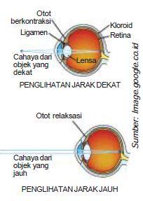 Fungsi Bagian-Bagian Anatomi Alat Indra Penglihatan Mata dan Juga Kelainan Pada Mata