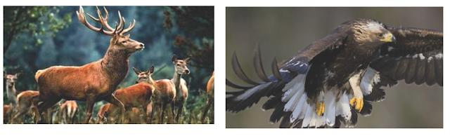 flora dan fauna inggris