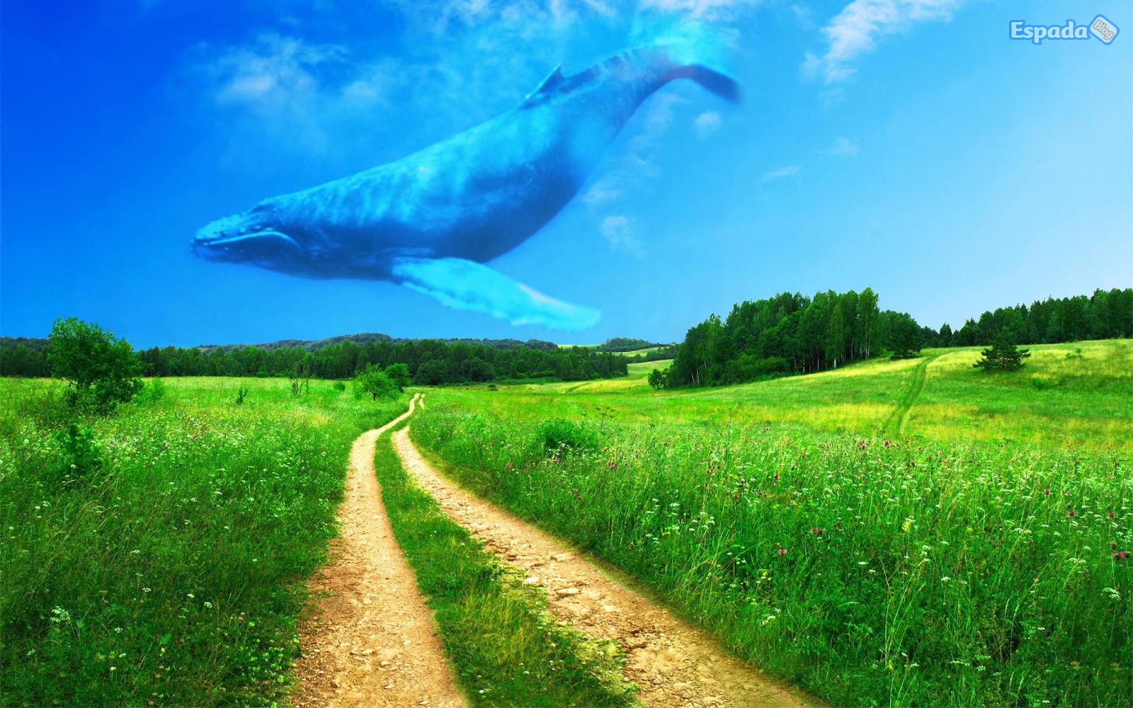 Tutorial Menggabungkan Gambar Menjadi Satu Dengan Photoshop Share Harga