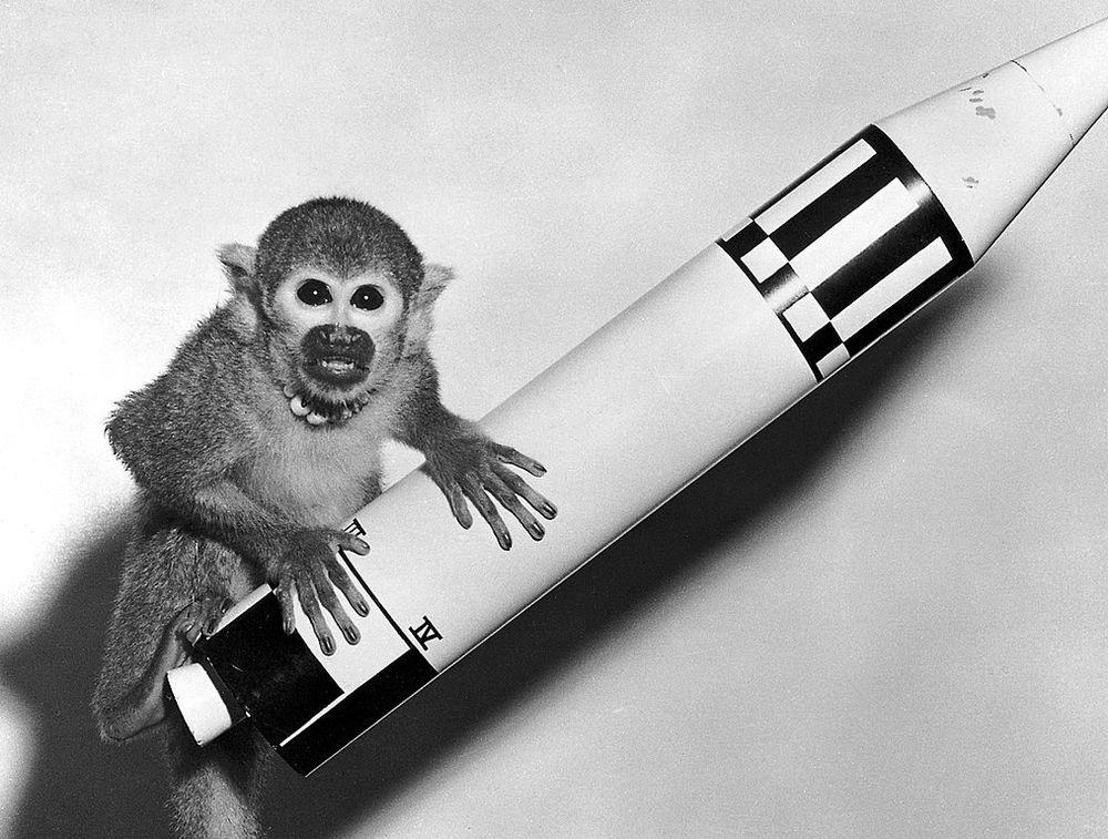 Miss Baker, the celebrity space monkey.