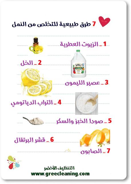 7 طرق طبيعية للتخلص من النمل