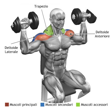 deltoid exercises  learn how to build shoulder muscles