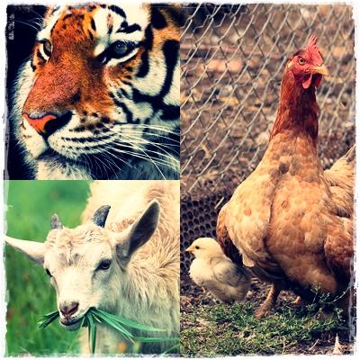 Ciri-Ciri Hewan Karnivora, Herbivora, Omnivora dan Contoh Hewannya