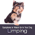 Symptoms To Watch For In Your Dog: What Is That Limp?