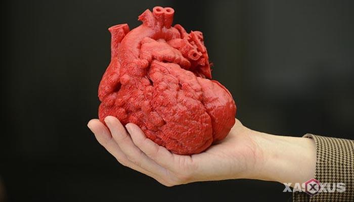 Fakta 5 - Detak jantung janin 25 minggu terdengar jelas