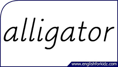 alligator flashcard, single word, English flashcards for kids
