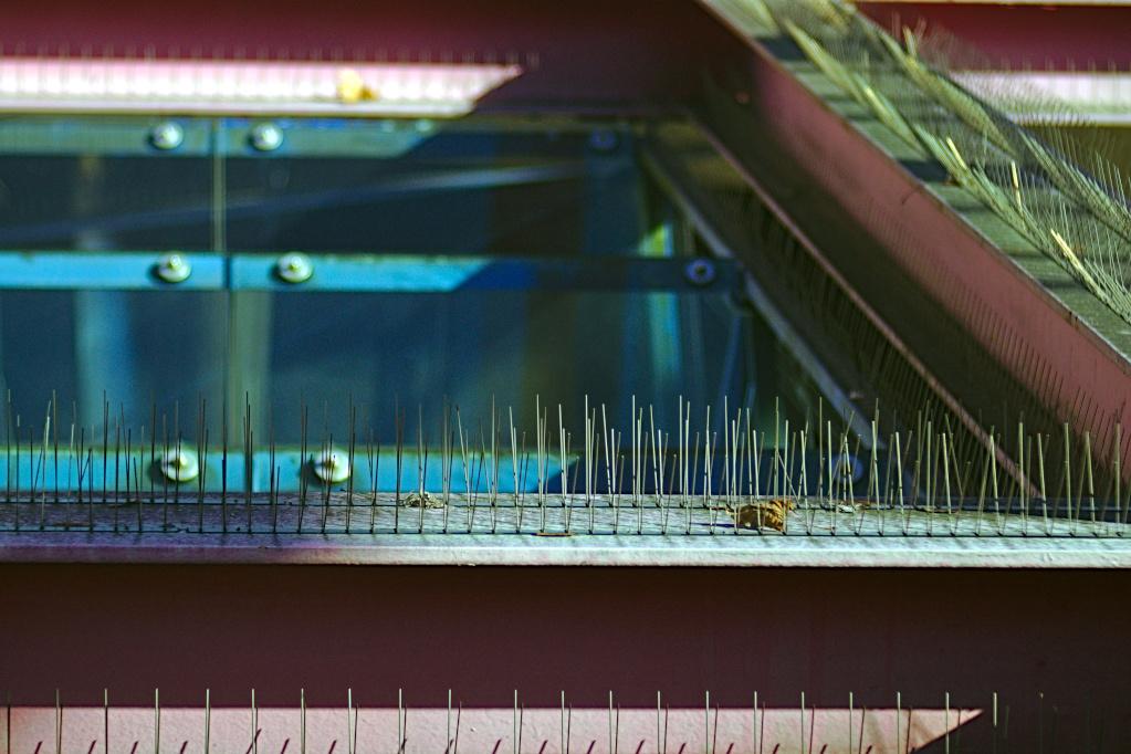 #269 Meyer-Optik Görlitz Diaplan f3.5 100mm – Tauben unerwünscht