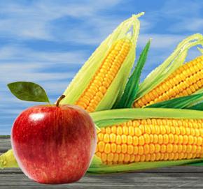 https://amajeto.com/games/corns_and_apples/