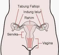 Tips Kesehatan Reproduksi Untuk Kesehatan Wanita