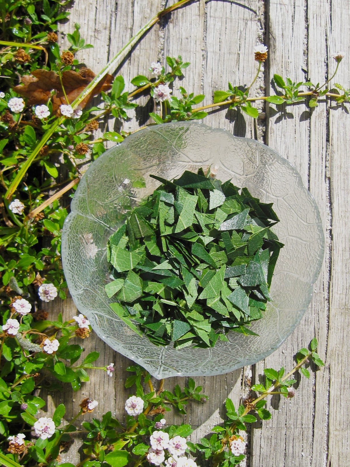 infusion feuilles figuier