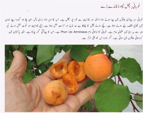 Benefits Of Dried Apricots (Sukhi Khubani) For Hair, Health
