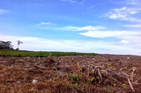 larangan pemerintah menebang hutan