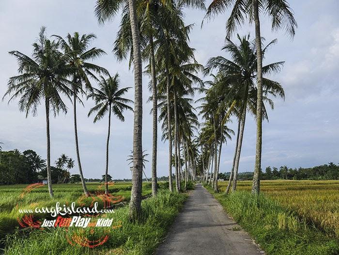 Spot Foto Pohon Kelapa Godean Sumberagung Moyudan Sleman Justfun Play Andkidd