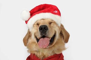Santa Claus Hund Wallaper Tier