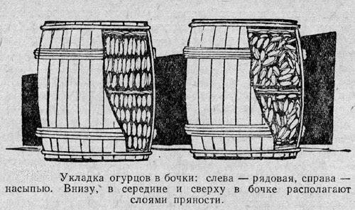 Укладка огурцов в бочки для засолки (соления)