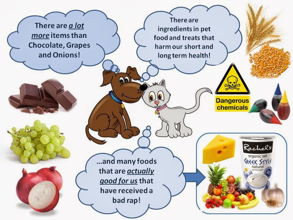 Foods Not To Give Dogs