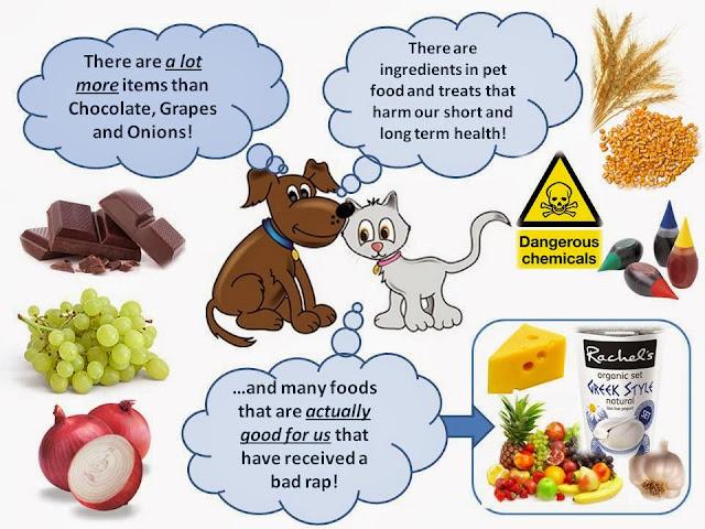 Dangerous Cat Food Ingredients