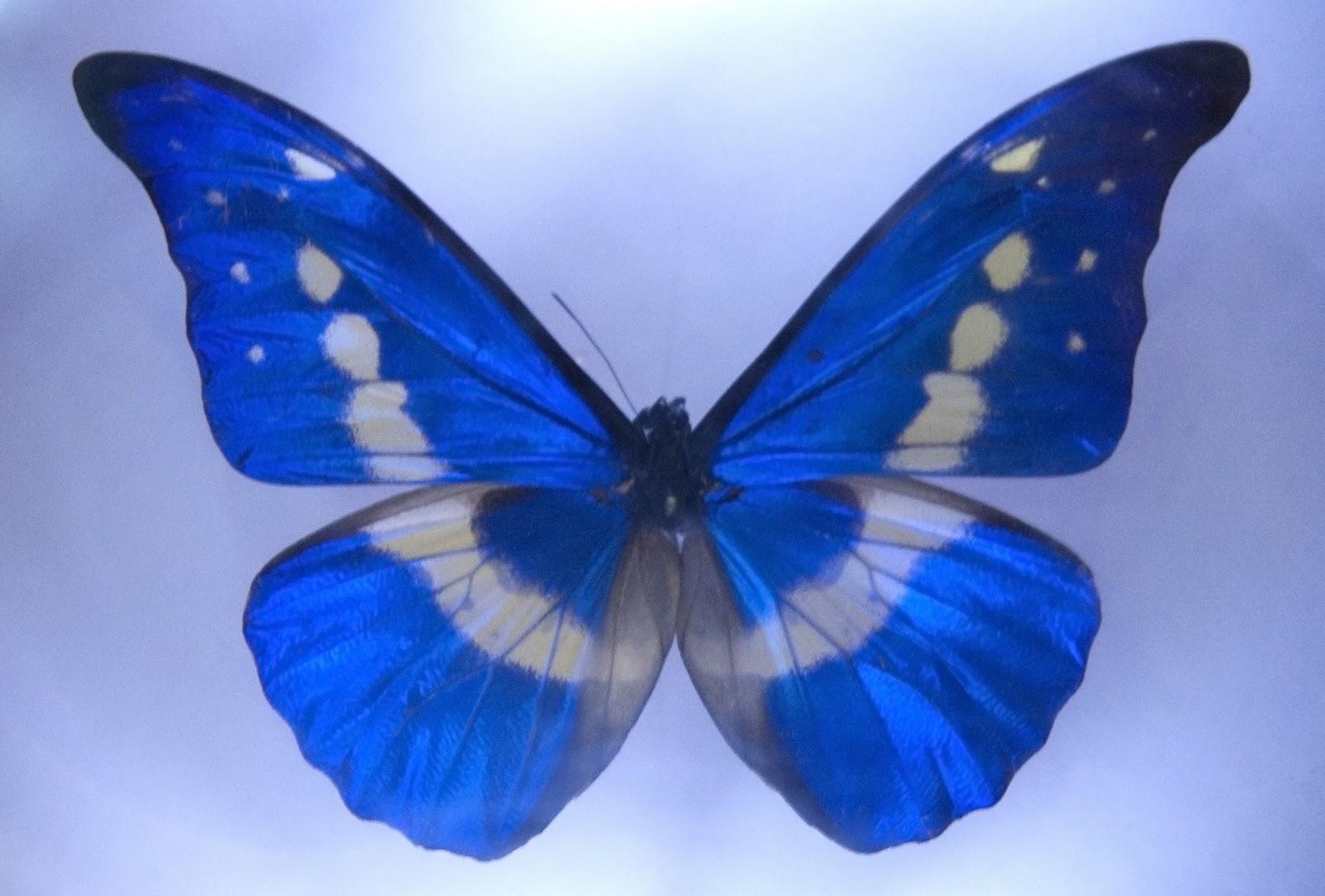 Silhouette Design Symmetry In Nature