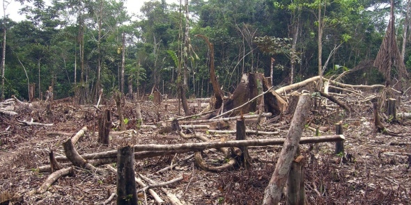 Image Attribute: Amazon Deforestation,  Matt Zimmerman under a Creative Commons Licence