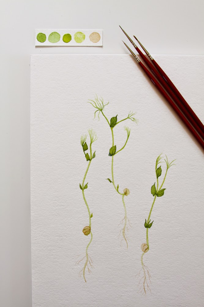 watercolor pea shoots