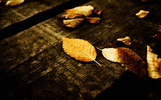 Wood Texture and Fallen Yellow Leaves HD Wallpaper