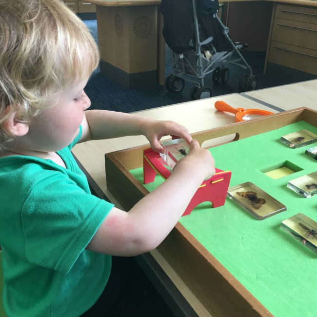 National-Museum-Cardiff-a-toddler-in-Clores-discovery-galler-looking-at-bugs-in-resin