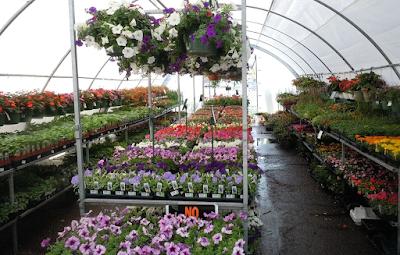 Flower Delivery Singapore, flower delivery, flower shop, flower shoping, send flower online