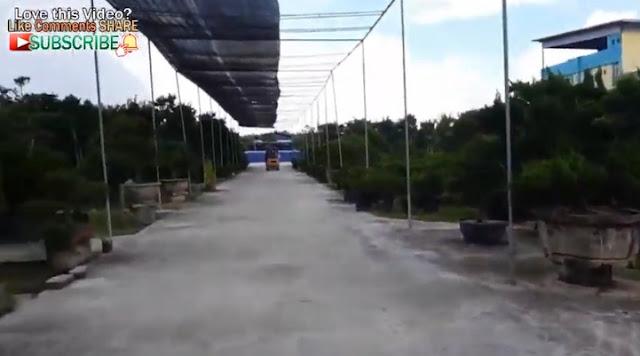 Hobi BONSAI 2 Hektar di Malaysia milik Mr Chia