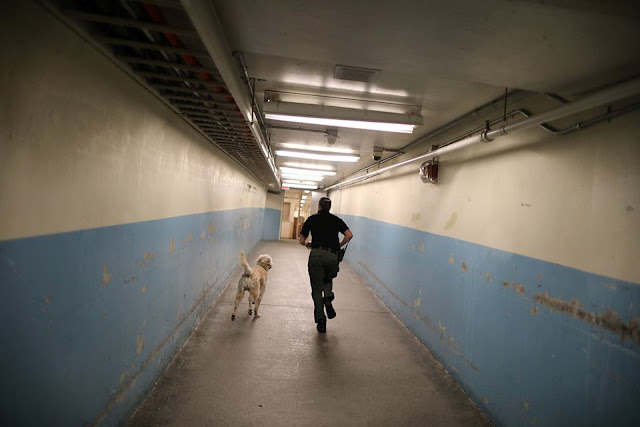 US prison asks inmates to take care of abused animals