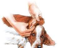 cuidado de su perro